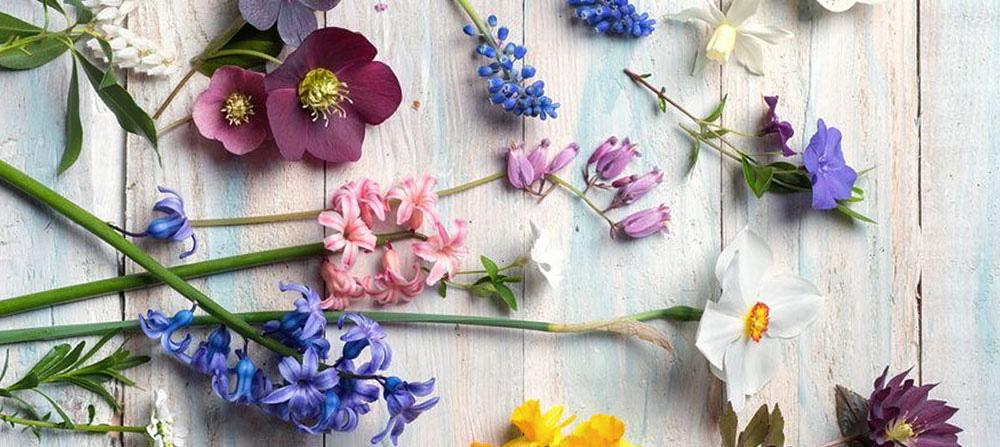 ventajas de flores de bach